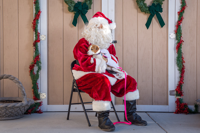 Pet Pictures With Santa-35.jpg