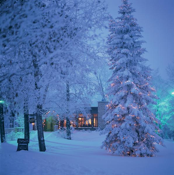 River Café Christmas Lights