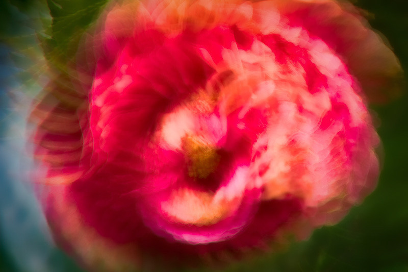 feb 14 - valentine flower.jpg