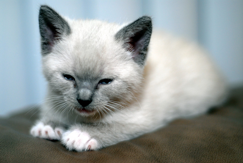 2007 04 12 - New Kitty 079.JPG