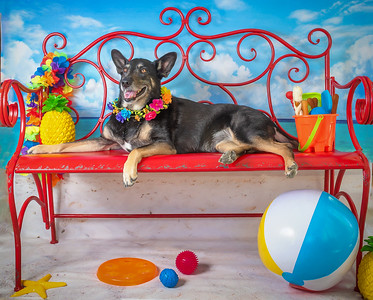 Lexi - Pet of the Month  June 2018