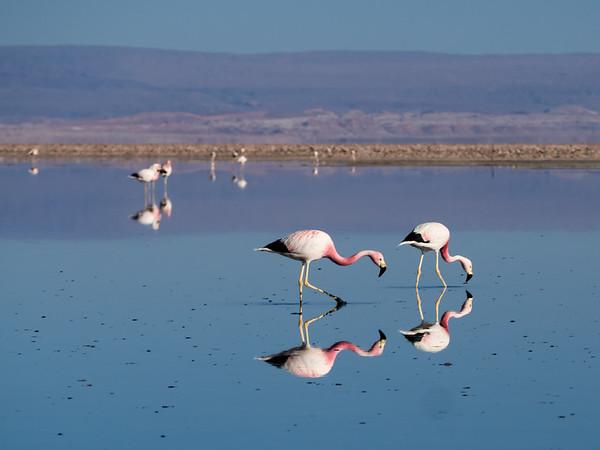 Altiplanic Lagoons of Atacama