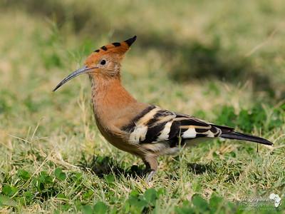 Namibia 2016 Birds