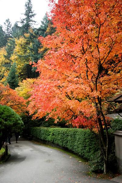 Portland Japanese Garden  11-11-11  3564.jpg