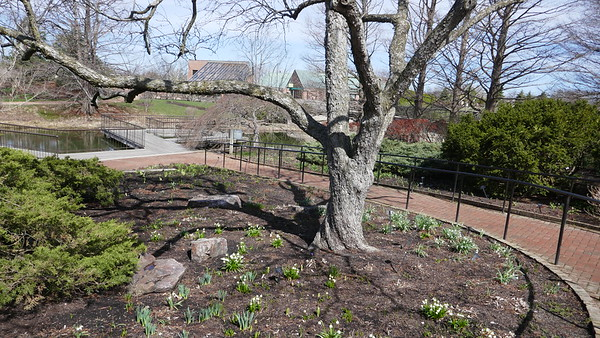 Chicago Botanic Gardens March 2019