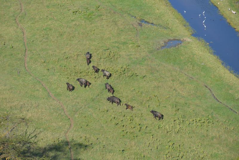 East Africa Safari 119.jpg