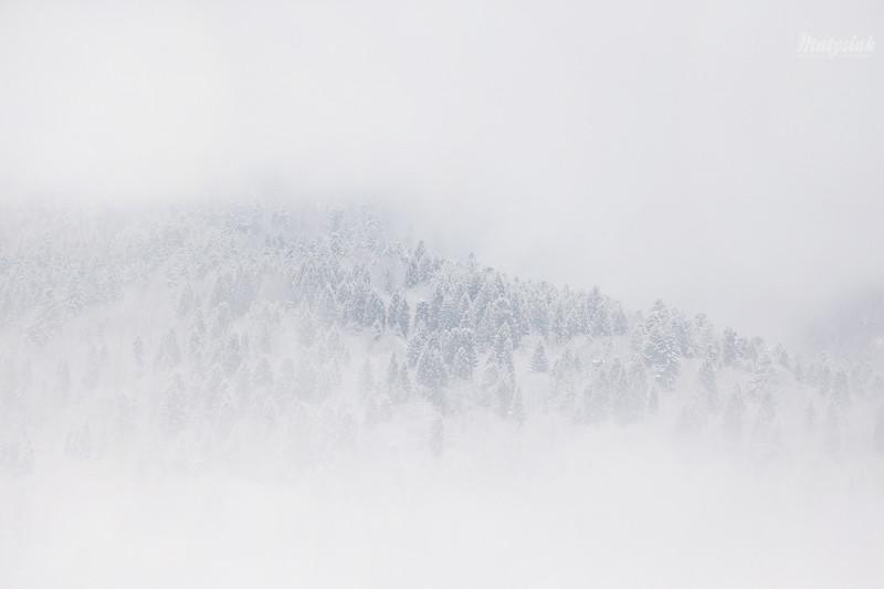 Deszcz i mgła / Rain & fog
