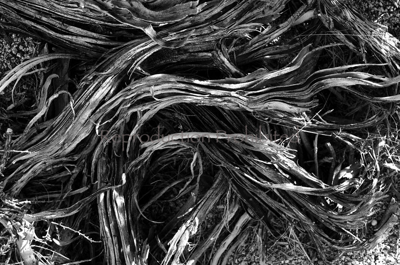 Shredded Eastern Sierra, California December 2012
