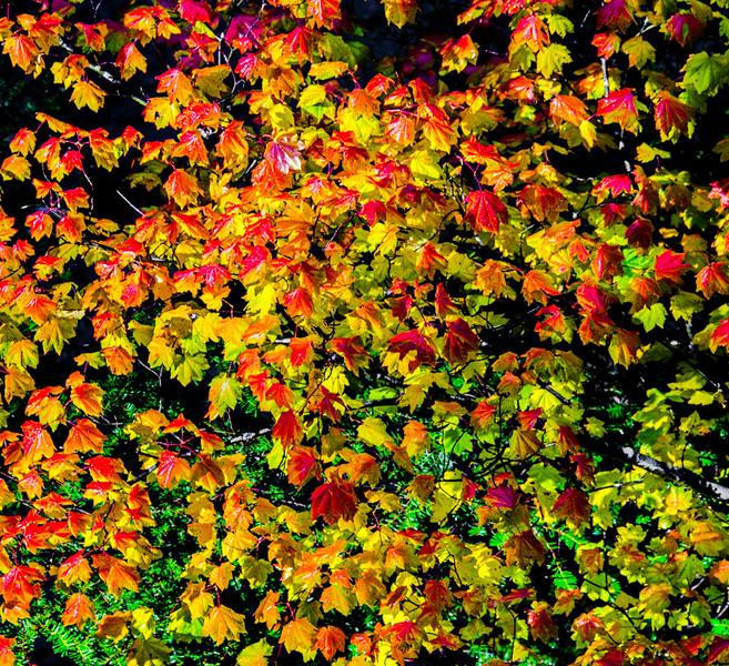 Rogue River_Fall Colors-3.jpg