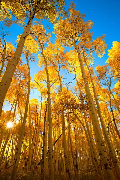 Fall colors near Beaver Creek, CO