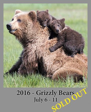 07-11-2016 Alaska Grizzly Bears
