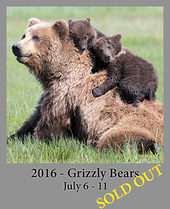 07-11-2016 Alaska Grizzly Bears