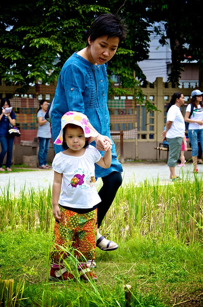 Exploring the experimental rice fields at Museum Siam.jpg