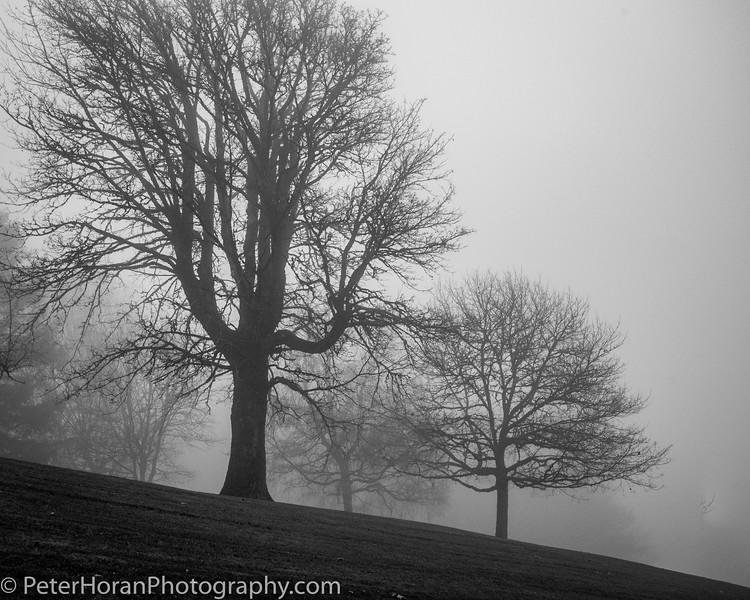ghost-trees-101_49059144063_o.jpg