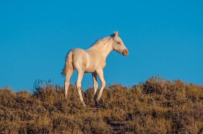 White Wild Foal Near Rt 6 #2