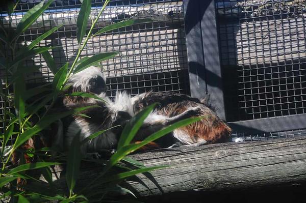 28 Nov 2016 Canberra Zoo