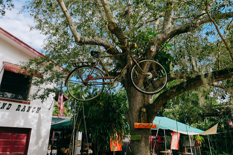 Bicycle on the tree @ Redland Ranch