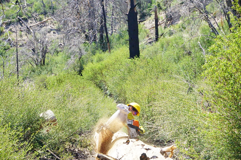 20170430002-Vetter Chainsaw Trailwork.JPG