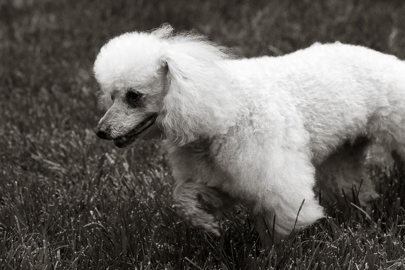 opal mike dogs (1 of 1)-115.jpg