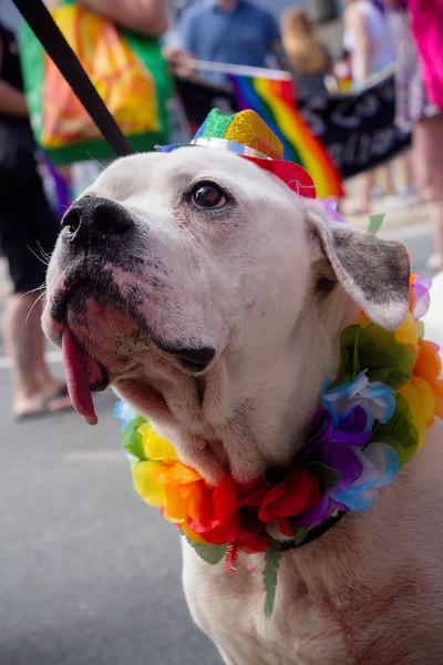pride2017IMG_3927.jpg