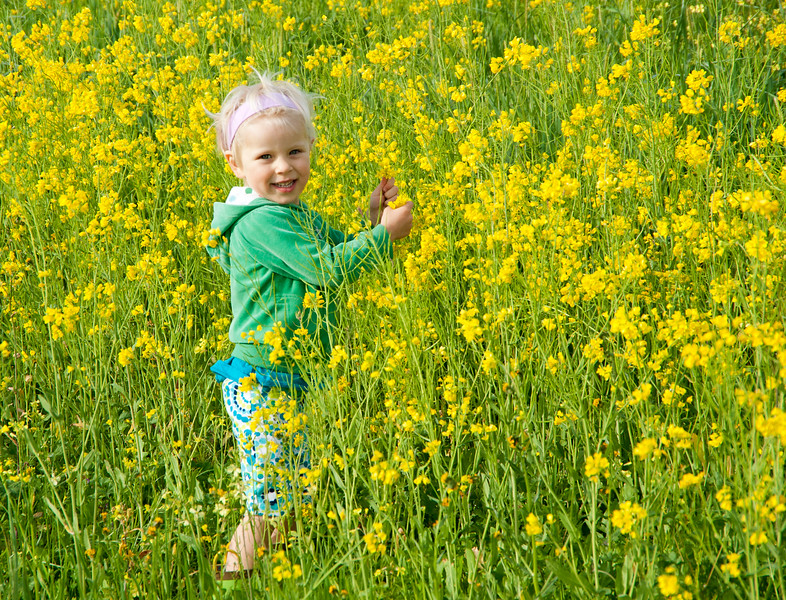 Sinflowers.jpg