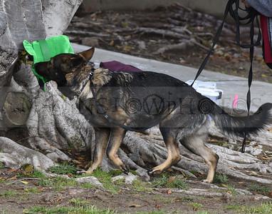 3-3-18 Dog 19