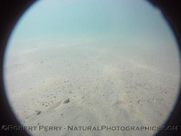 2012 01-12 Zuma Subtidal Camera Sled