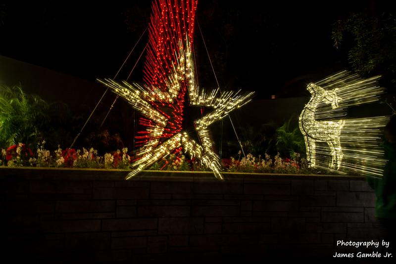 Houston-Zoo-Lights-2937.jpg