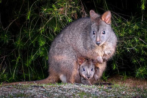 Featured Gallery: Tasmania
