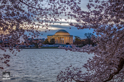 2018_04_08 - DC - Cherry Blossoms