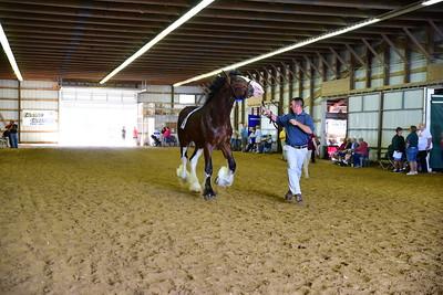 21 Jr Champ.Reserve Clyde Stallion