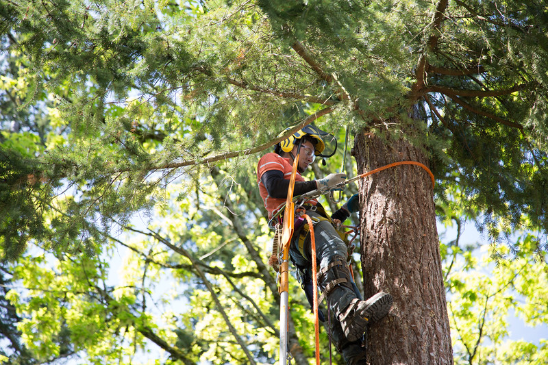 20170504-Tree-Cutting-21.jpg