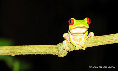 Costa Rica Birds, Bats, Butterflies, Frogs, Monkeys, Photographers and Beaches 1-29-13