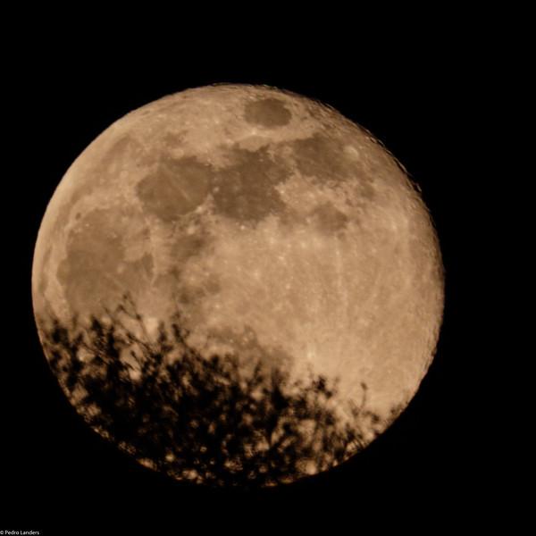 Moon and Oak Tree