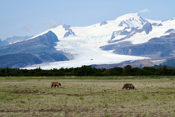 Hallo Bay Eastern Katmai August 2020