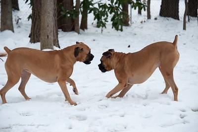snow boxers 2011