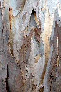 Wood Abstracts