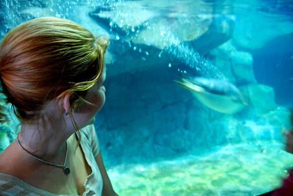 Aquarium 5-16-08