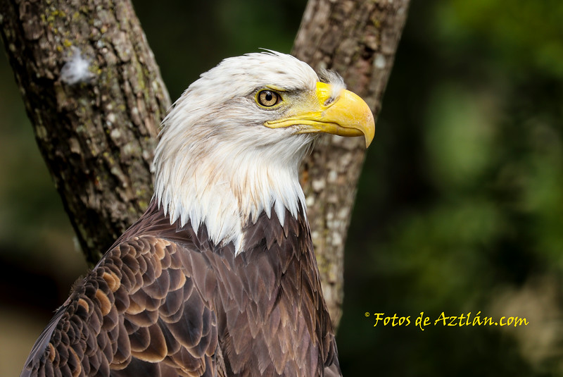Eagle1 IMG_1472.jpg