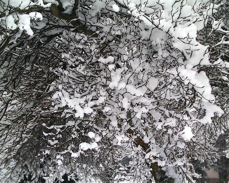 1-30-2002-snow#6].jpg