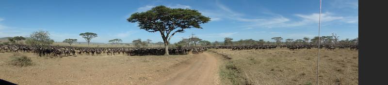 East Africa Safari 337.jpg