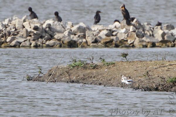 2013-10-21 Riverlands Migratory Bird Sanctuary