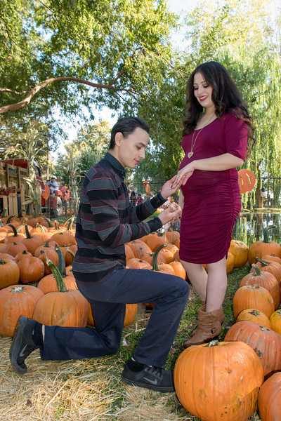 Proposal @ Banducci pumpkin patch