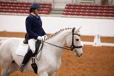 Horse 162