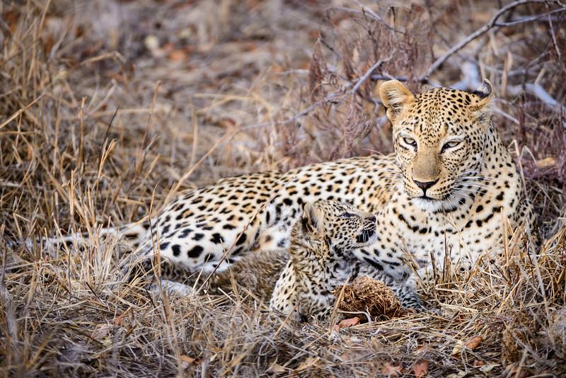 LeopardHills-20150825-2057.jpg