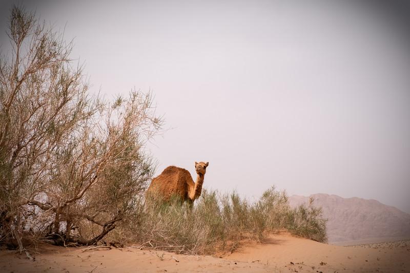 2018_Jordan_Wadi Rum 3_genevievehathaway-13.JPG