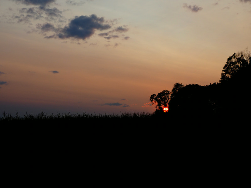 cornfield sunset 2.jpg