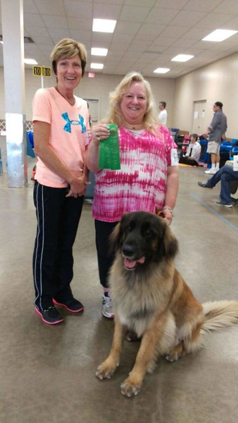 2015-2016 Dog Shows
