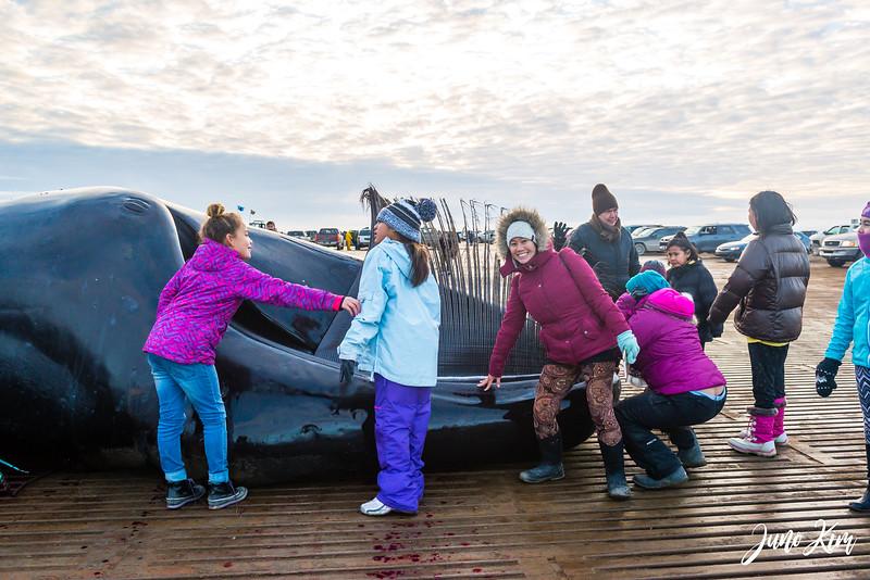 Utqiagvik Whaling-6104892-Juno Kim.jpg