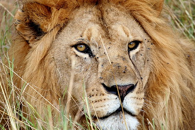Africa, Safari Tanzania